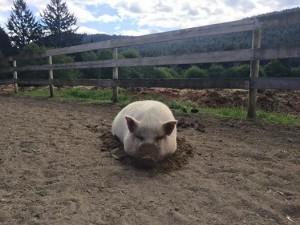 Miss Piggy 2