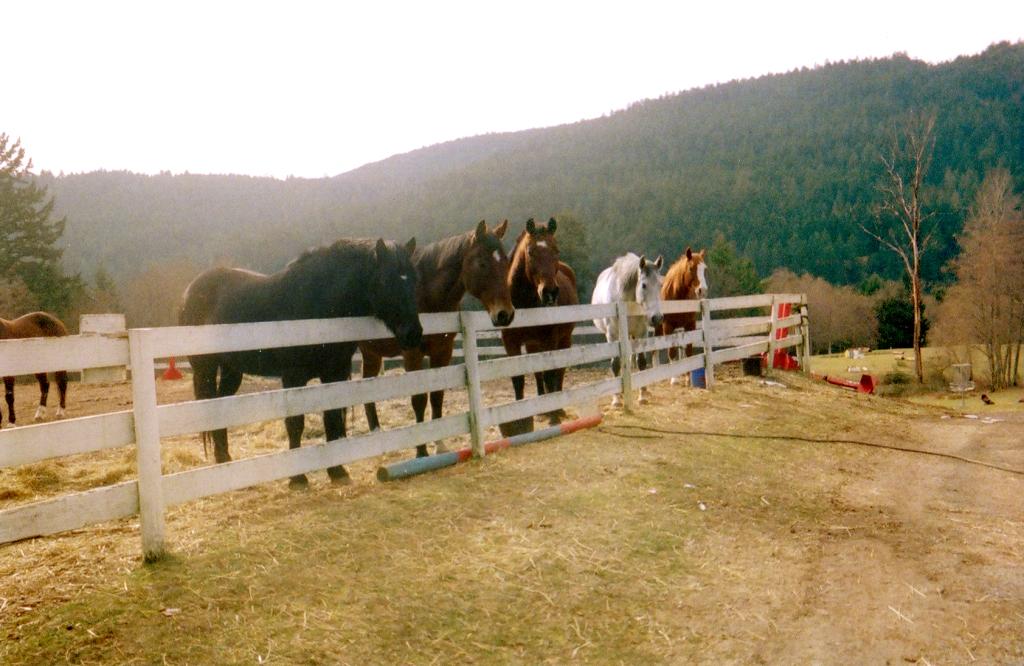 horsesatfenceEdit